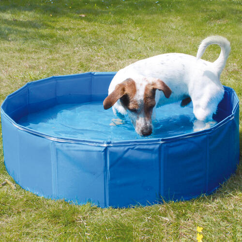 hunde pool doggy 80 x 20cm blau swimmimg pool plantschbecken ebay. Black Bedroom Furniture Sets. Home Design Ideas