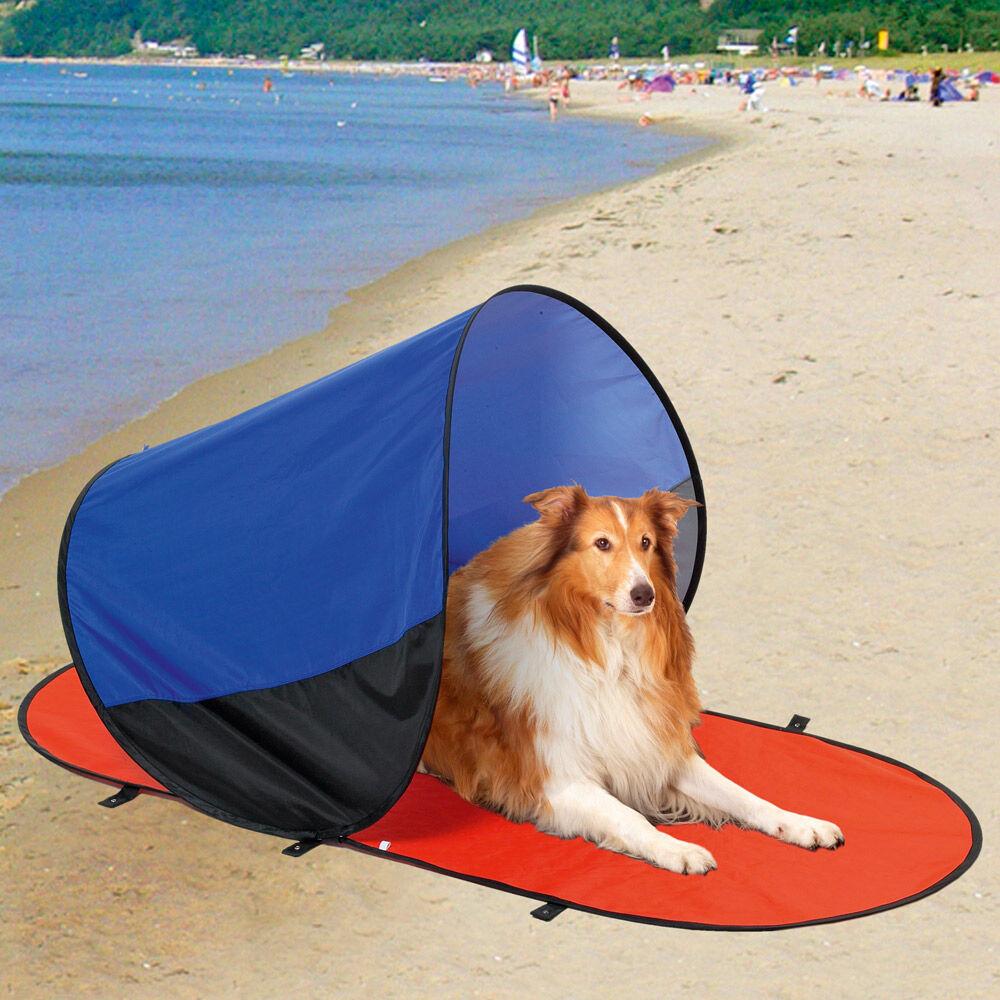 strandmuschel hund
