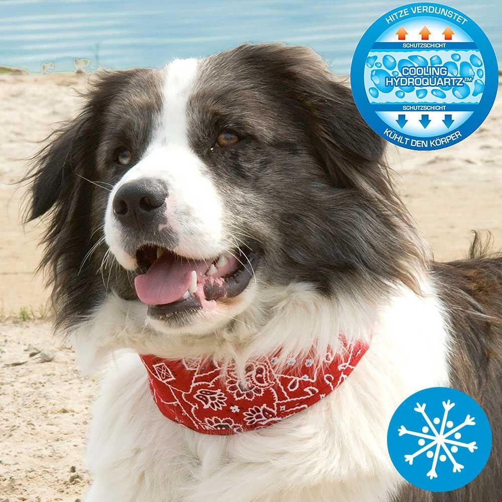 Hunde-Kühlhalsband - rot -. Schecker.de