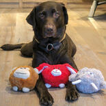 Hundespielzeuge Moppelchen - Wally -