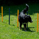 Dog Agility Starter-Set