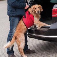 Hunde-Tragehilfe Helping Harness