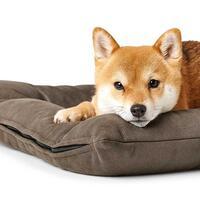 HUNTER Hundebett Bologna, Farbe: Braun
