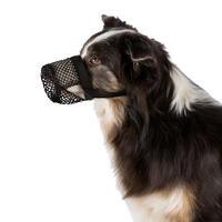 Giftköder Schutznetz für Hunde