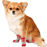 Hundesocken, Farbe: grau-rot