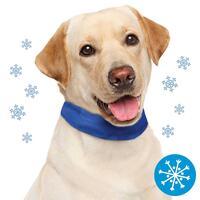 Schecker Kühl-Halsband für Hunde