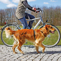 Fahrrad- und Joggingleine, schwarz